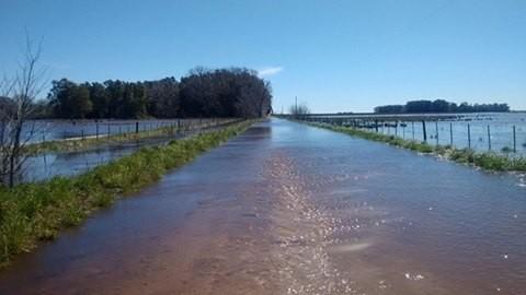 inundacampo